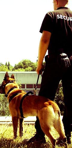 Agent de sécurité avec un chien